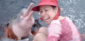 2012-07-18 Khanom Pink dolphins HOVED.jpg