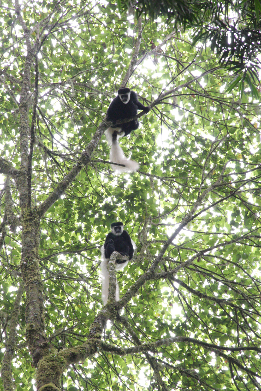 2012-11-02 Kilimanjaro Martin Fremstad 3.jpg