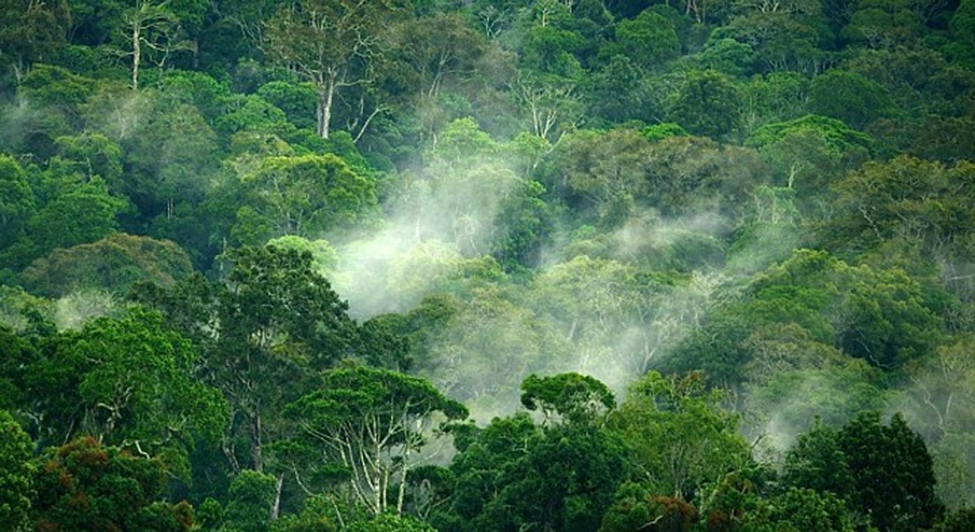 2012-01-11 Hoved Tanzania Ny slangeart RL