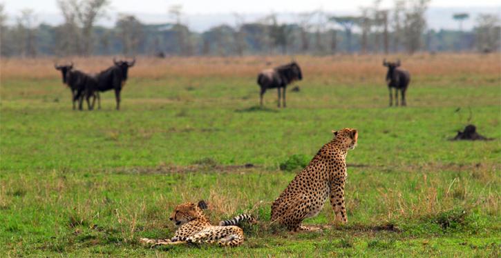 2012-01-11 RL Tanzania Fete dyr 1