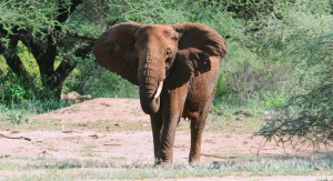 2012-01-11 RL Tanzania Fete dyr Hoved