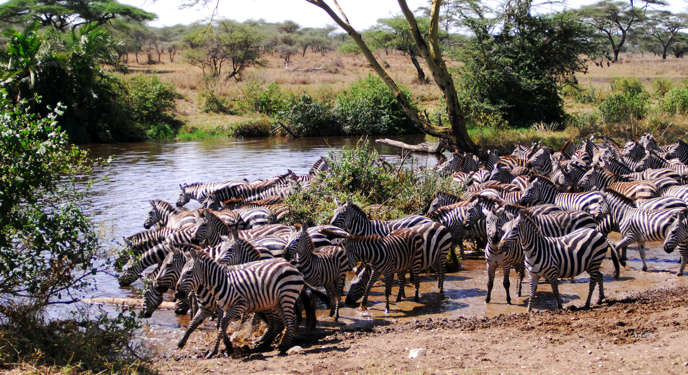 2012-02-09 Serengeti befolkningsvekst Hoved RL
