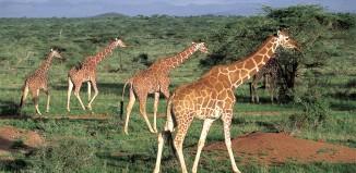 2013-12-05 Kenya.jpg