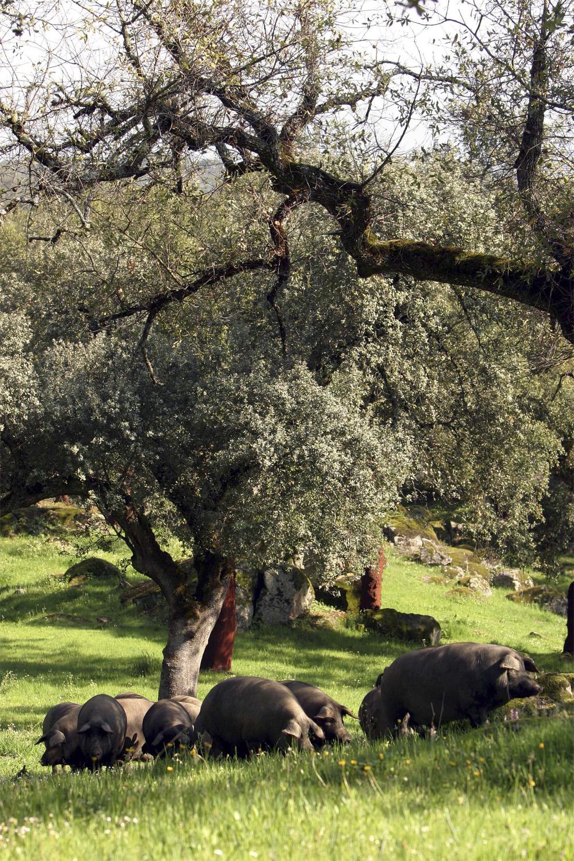 Andalucia Grisehistorie 0706 Landskap