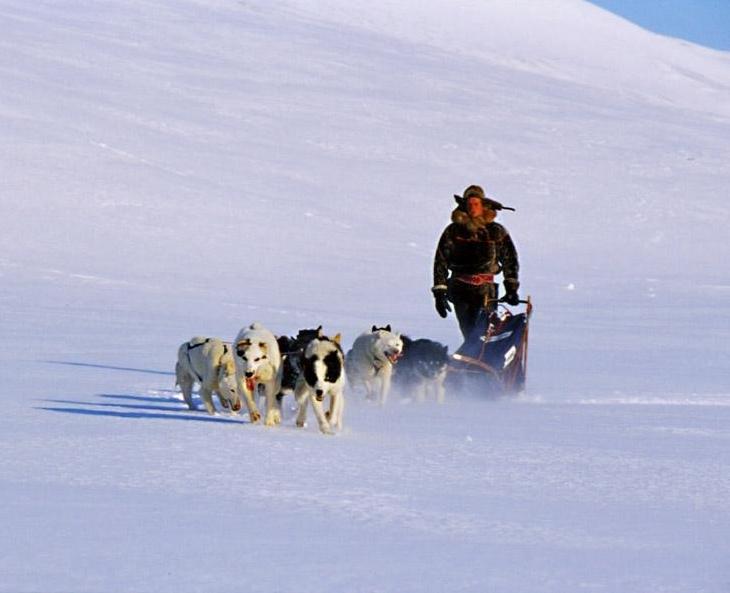 Finnmark Mehamn Snøscooter 0703 Hunder
