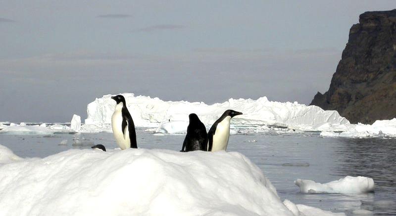 Hurtigruta Antarktis Cognac 0606 Hoved