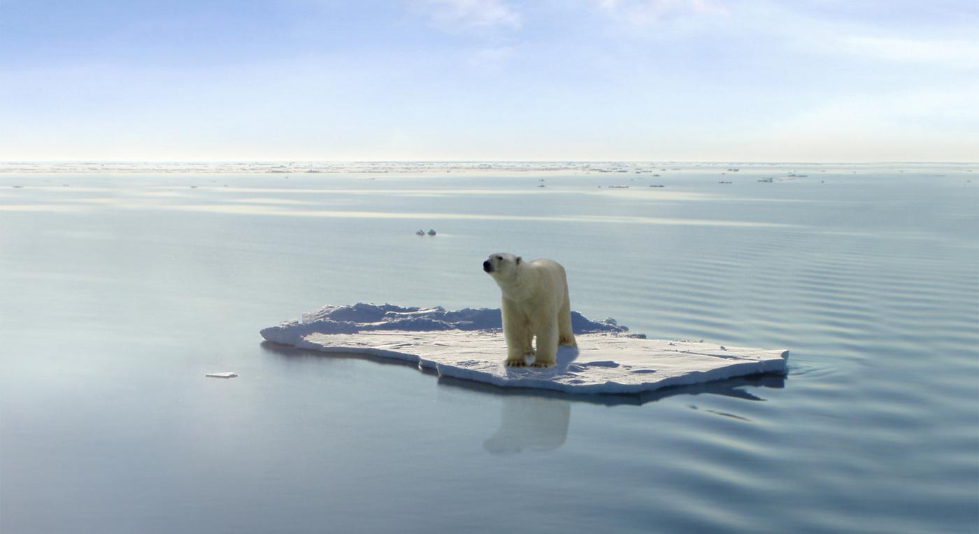 Isbjørn og vin 0710 Hoved