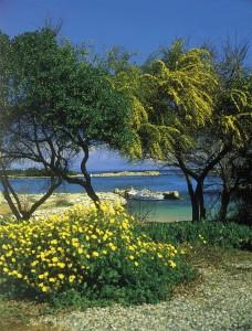 Kypros Generelt 0704 Proteras