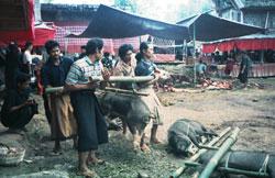 Mann med stokk og griser 0506
