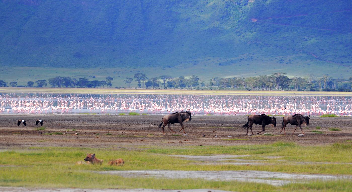 RL GoAfrica 2011-08-01 Tanzania påske 2011 Ngorongoro