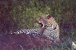 Sør-Afrikas mange nasjonalparker 2