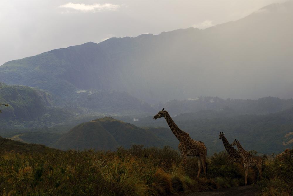 Tanzania Fotosafari 0801 Arusha