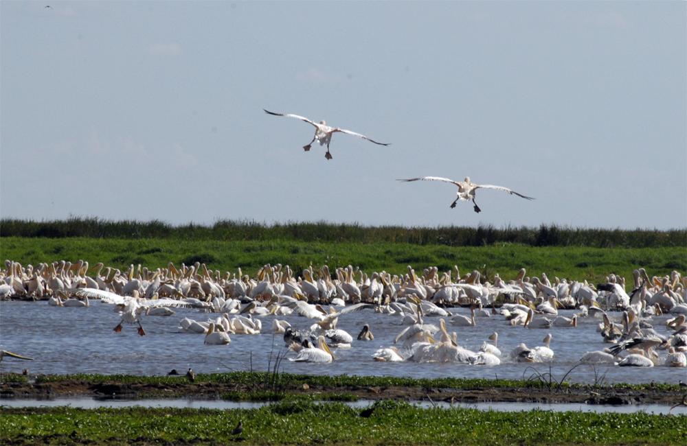 Tanzania Fotosafari 0801 Fugler
