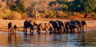 Tanzania Fotosafari 1003 Hoved