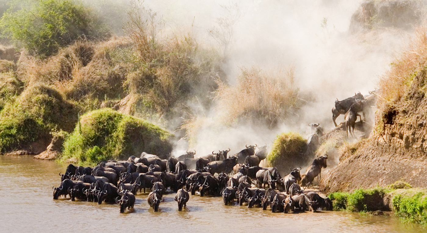 Tanzania Serengeti 0804 Hoved