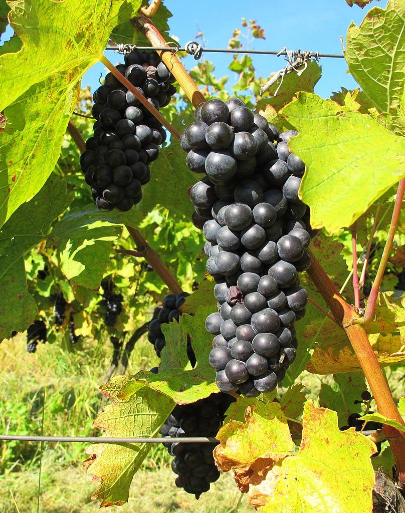 Vin 2011-11-29 Druer