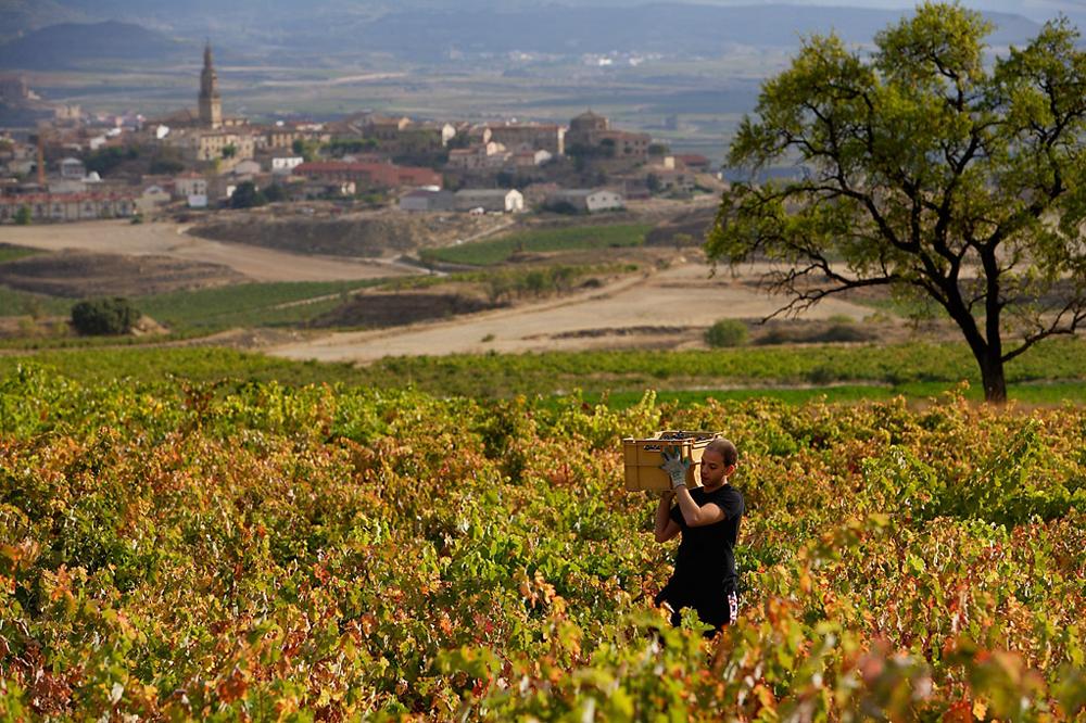 Vino Spania Rioja Crianza 0903 Vingård