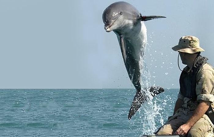 Zanzibar Delfintur Utflukt 2