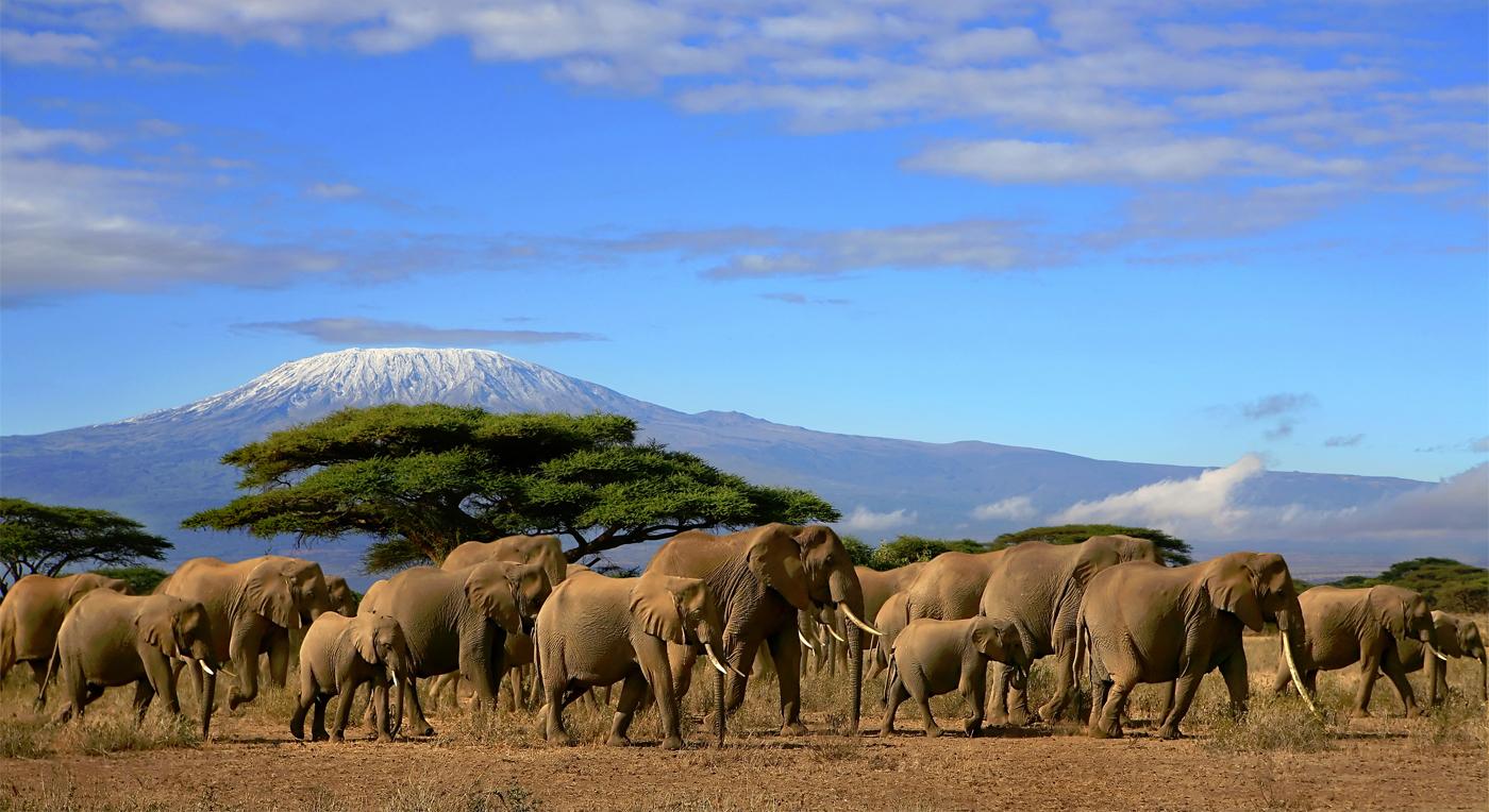 Den lange safarien