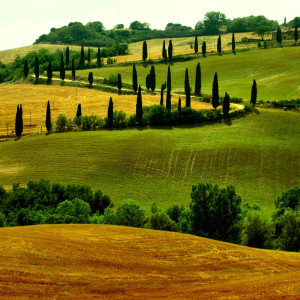 Bølgende landskap i Toscana med sine flotte cypresstrær som er verdens mest fotograferte tre.