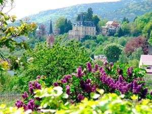 Utsikt fra vinruten i Neustadt.