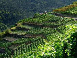 Den tyske vinruten ved Heiligenberg vingård.