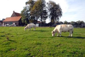 Slik er landskapet i Flandern i dag. Harmonisk, frodig, rolig og vakkert. Foto: Per Henriksen
