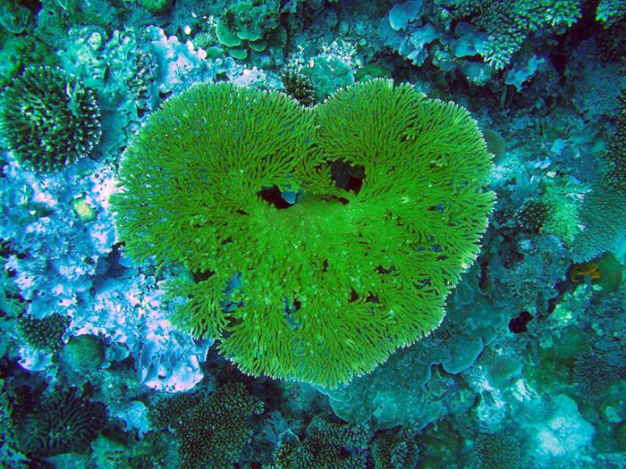 Du skal ikke langt fra land før du ser vakre koraller.