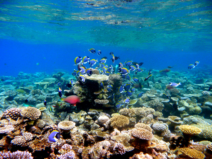 Fargerikt rundt atollene på øyene på Maldivener.