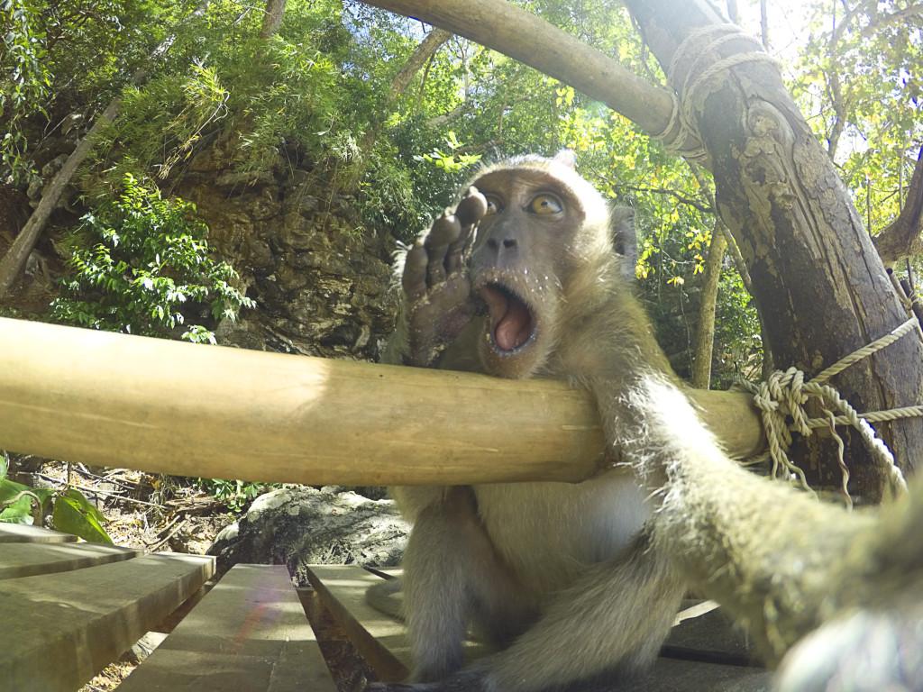Låner du bort din Gopro til en liten apekatt, kan du få et slikt bilde. Foto: Martin Karner