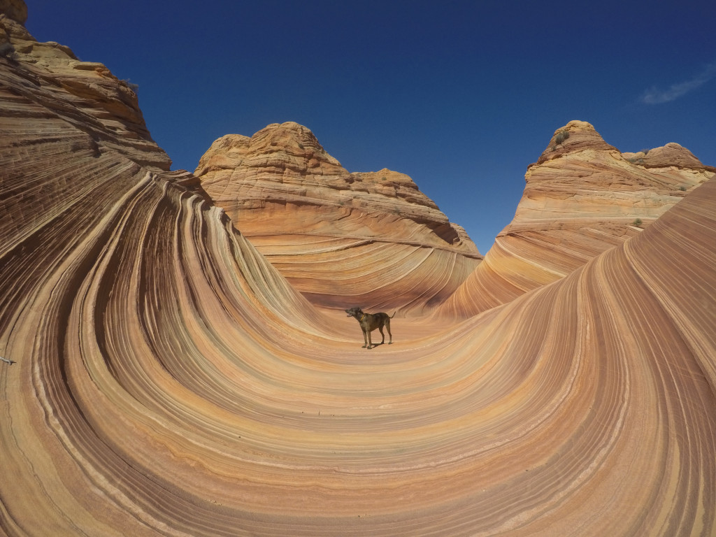 Fra steinformasjonen «The Wave» i Arizona. Foto: Trevor DeHaas