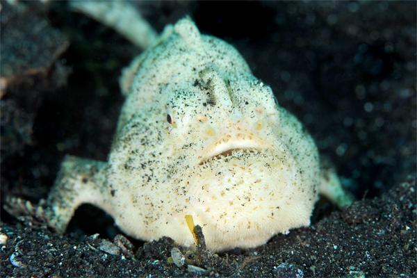 Norge eller Indonesia? Fargerikt der nede i dypet. Foto: Christian Skauge.
