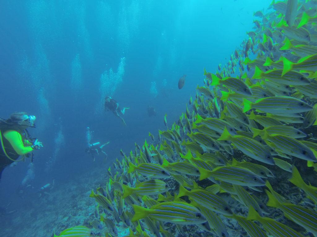 Rundt de fleste øyene på Maldivene er det mulig både å snorkle og dykke og oppleve det fascinerende livet under vannflaten.