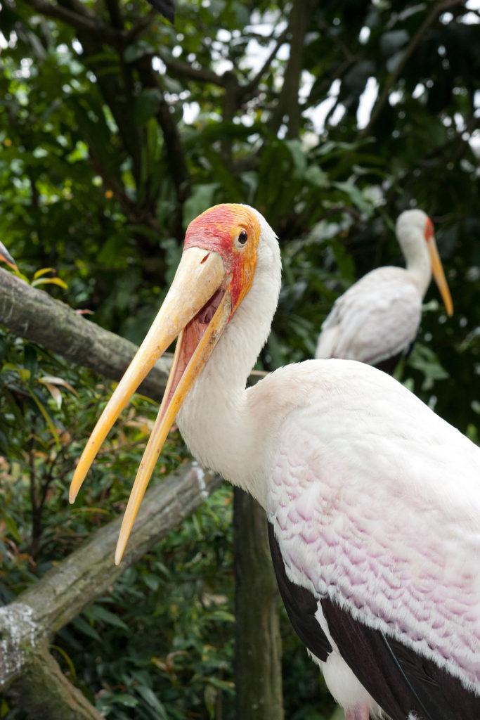 Den berømte fugleparken i Kuala Lumpur er verd et besøk. Det blir noen avslappende timer.