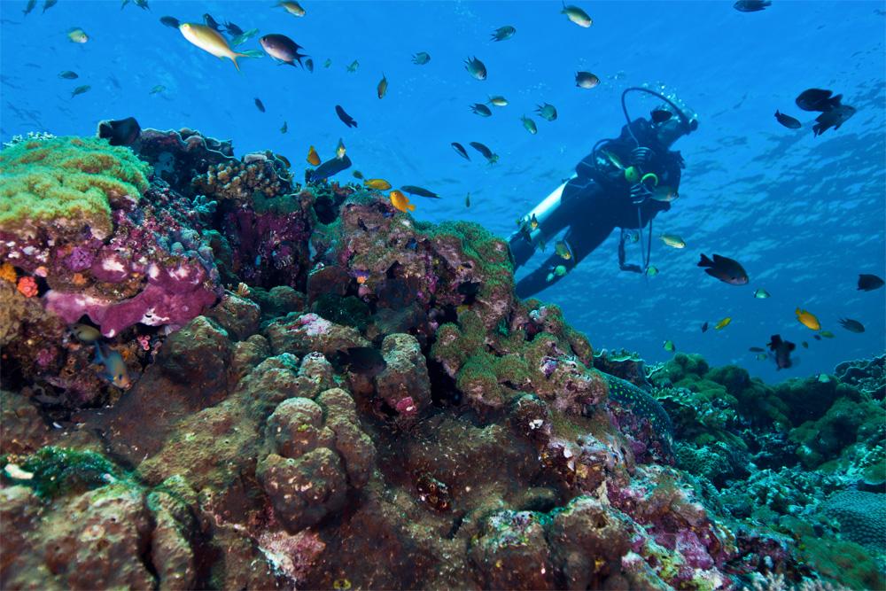 Krystallklart vann og et fargerikt undervannsliv.