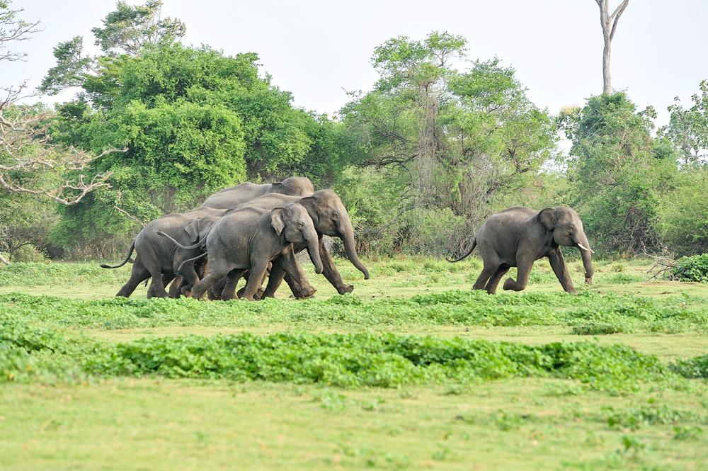 Landet byr også på fantastiske safariopplevelser.