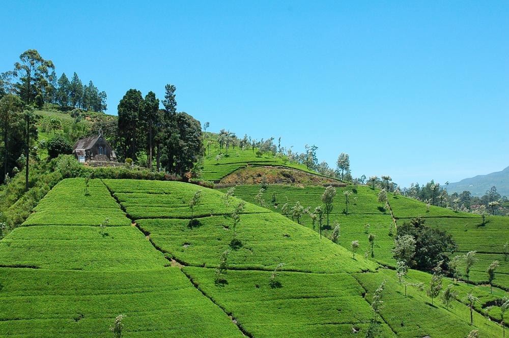 Asias grønne øy, blir Sri Lanka ofte kalt.