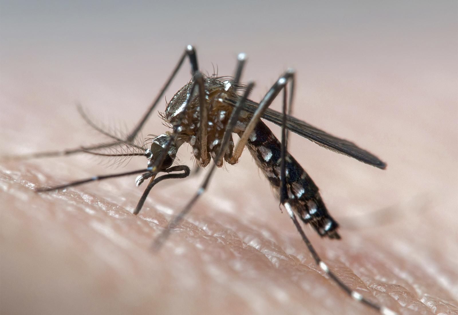 Unngå denguefeber